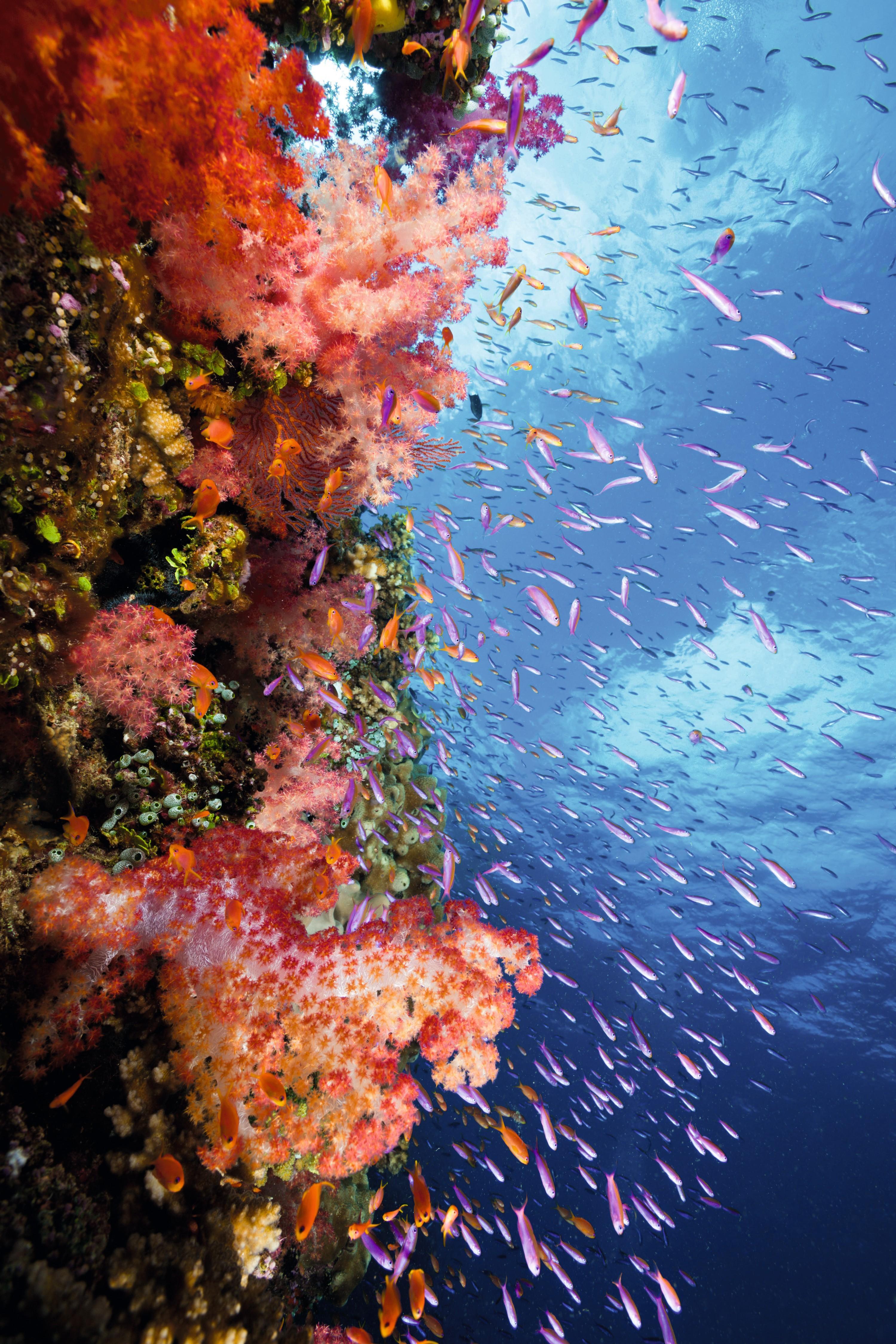 Logo Les échelles de la biodiversité