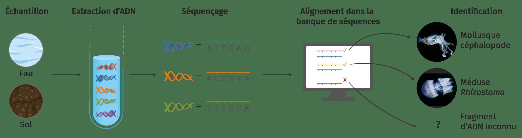 méthode de barcoding moléculaire