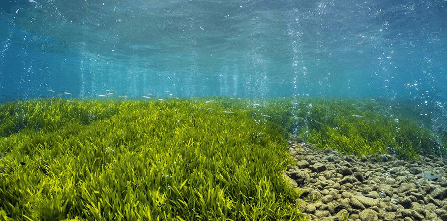 Herbier marin