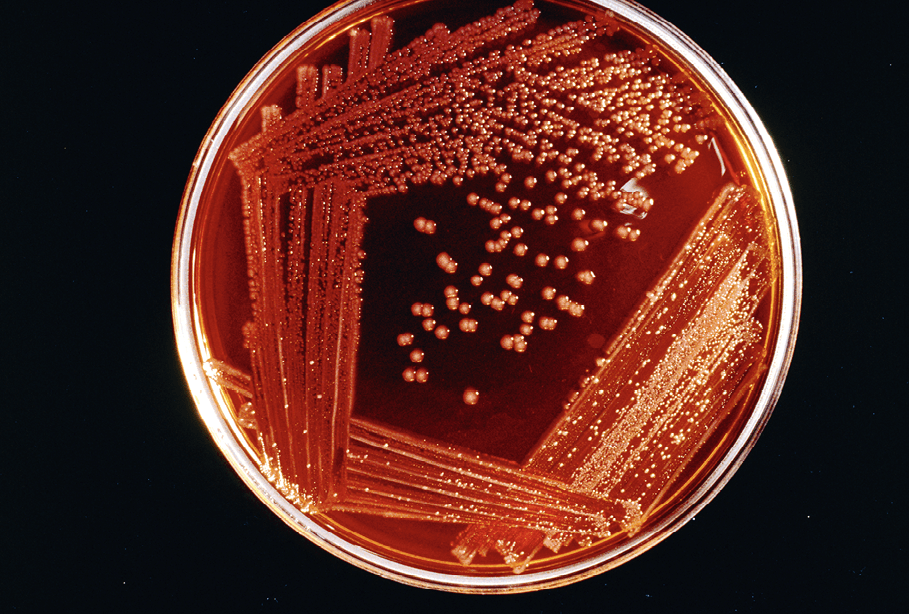 Croissance Bacteries