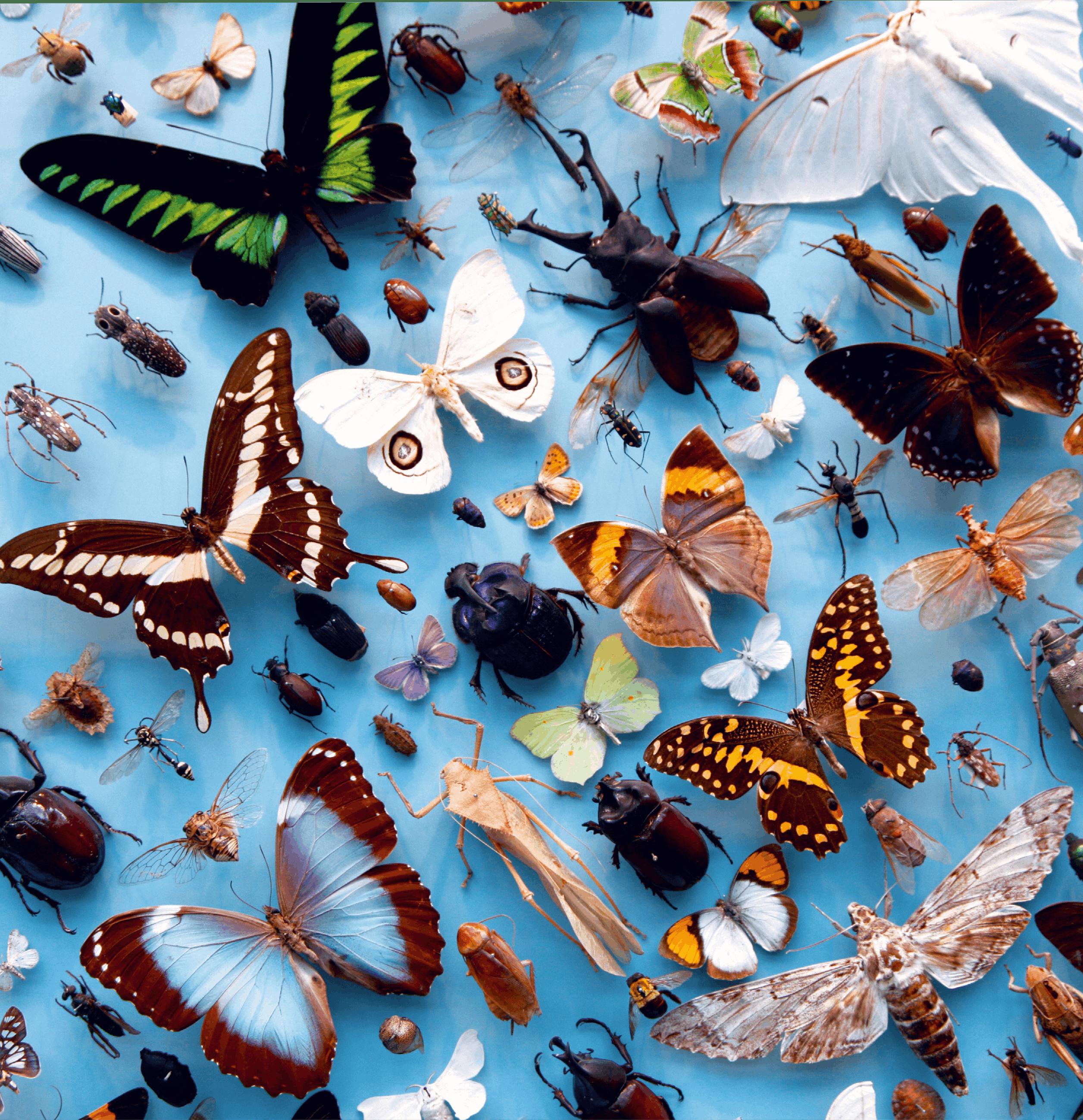 insectes, papillons, sauterelles, scarabées naturalisés ou sous verre