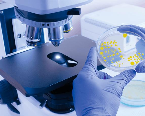 Analyse microscopique d'une colonie de bactéries
