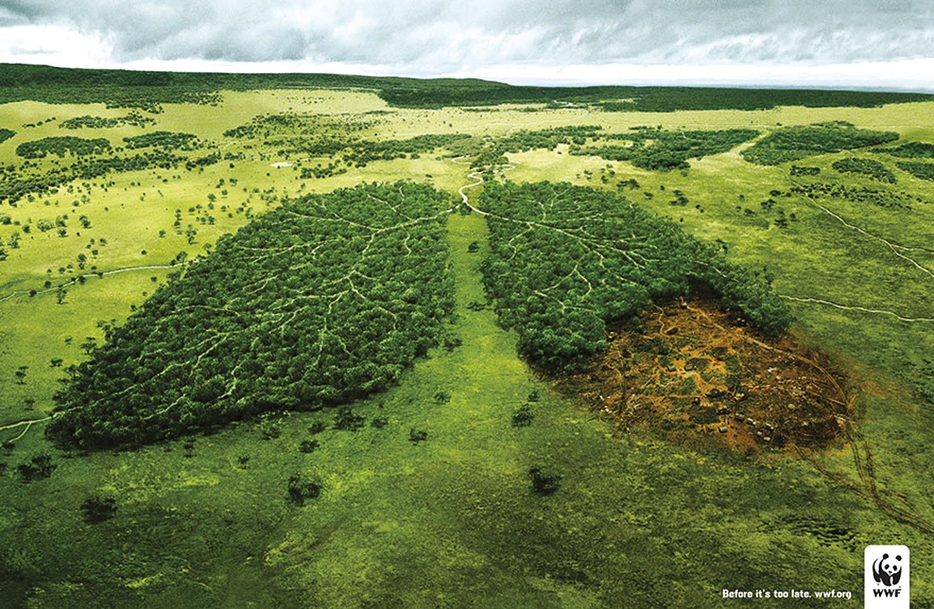campagne de sensibilisation du WWF contre la déforestation.