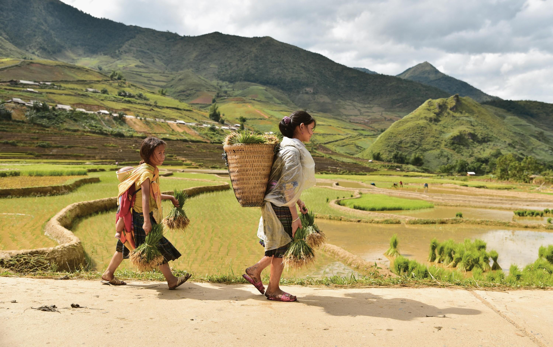 <stamp theme='his-green2'>Doc. 2</stamp> Travail dans les rizières (Vietnam)