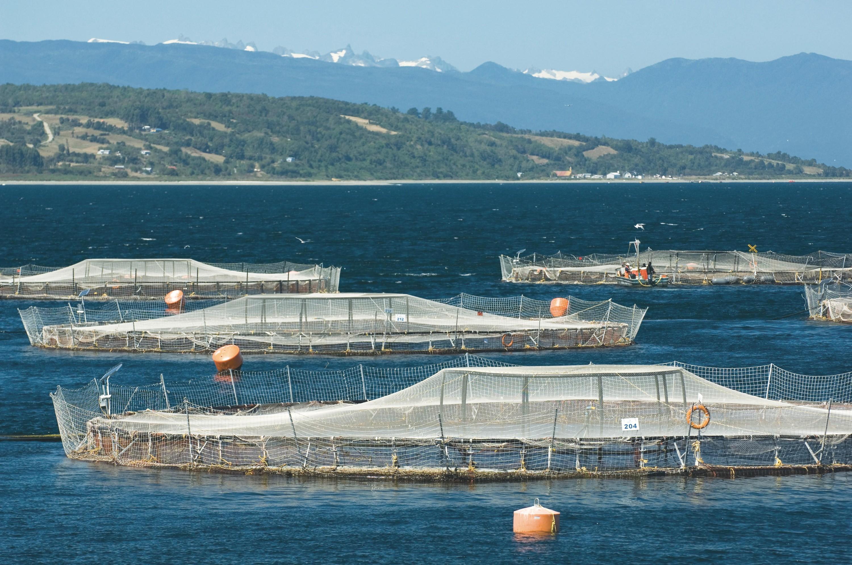 <stamp theme='his-green2'>Doc. 3</stamp> Une ferme aquacole de saumons (Chili)