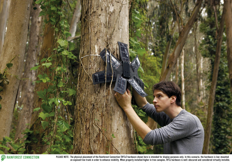 « Rainforest connexion », des téléphones portables pour lutter contre la déforestation, à Bornéo