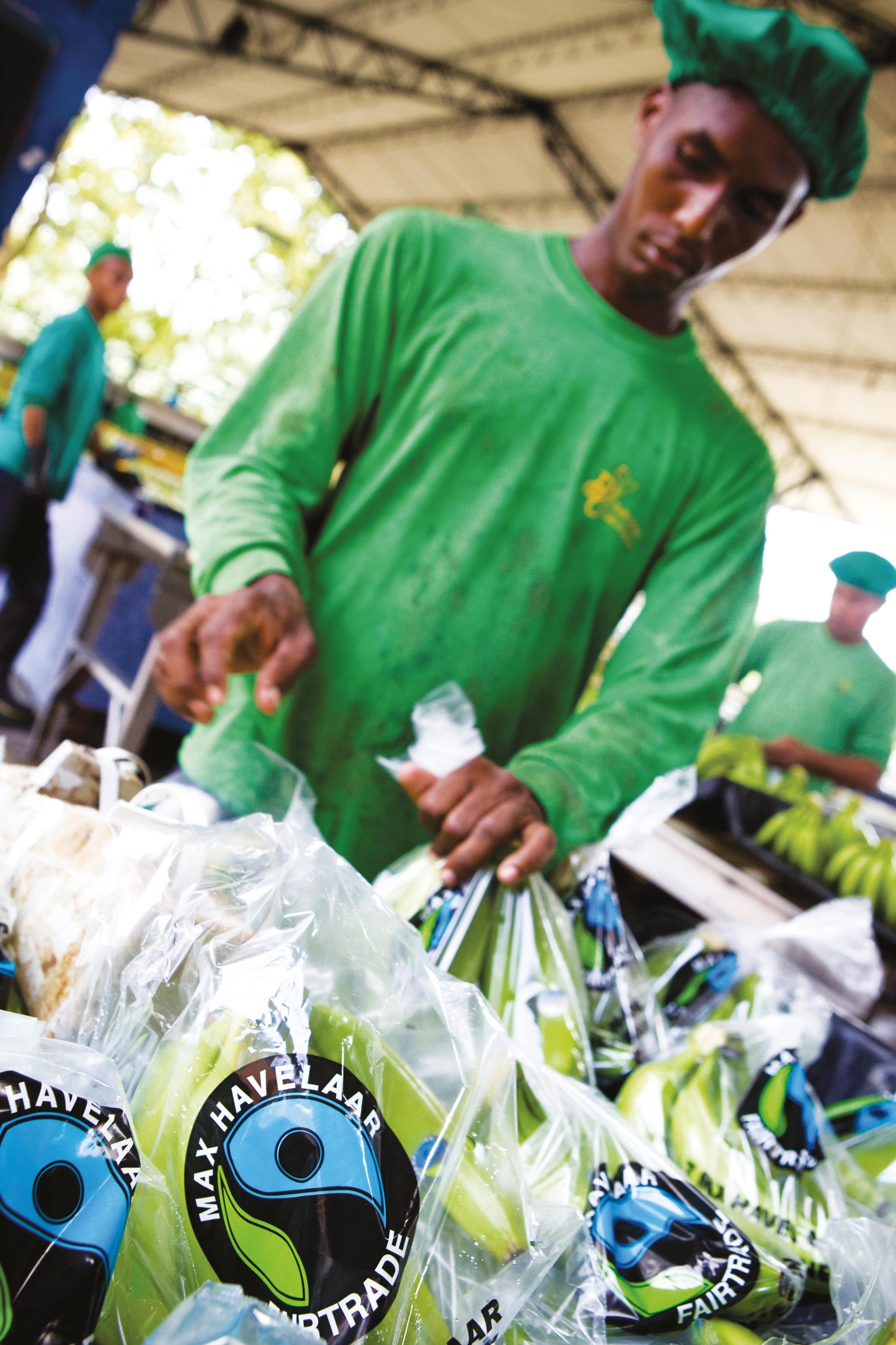 Plantation de bananes agrée « commerce équitable » (Colombie)