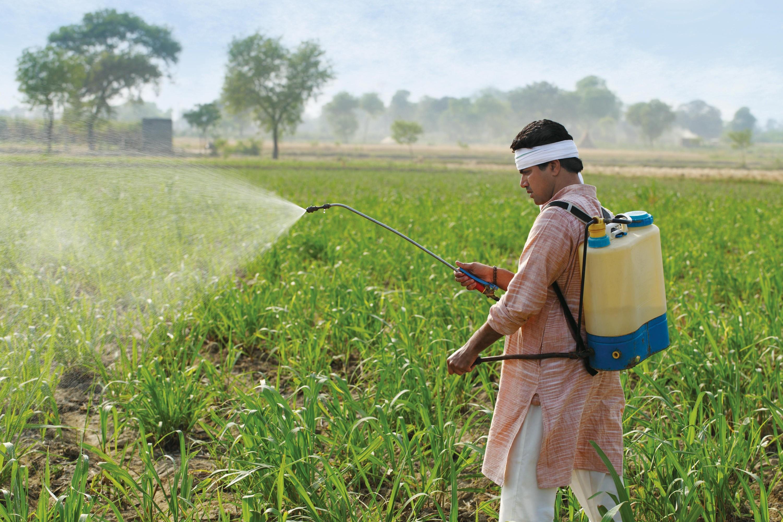 Épandage de pesticides dans un champ (Inde)