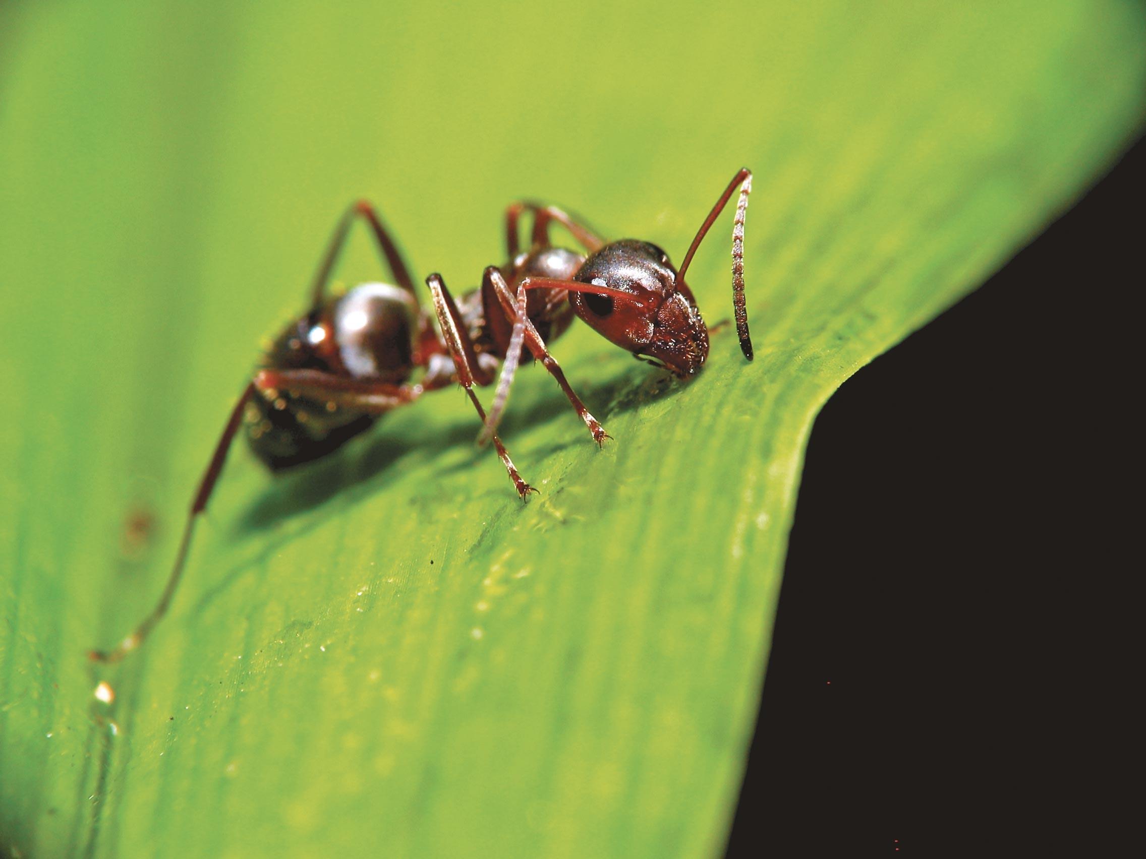 Ex. 11 Une fourmi adoptée