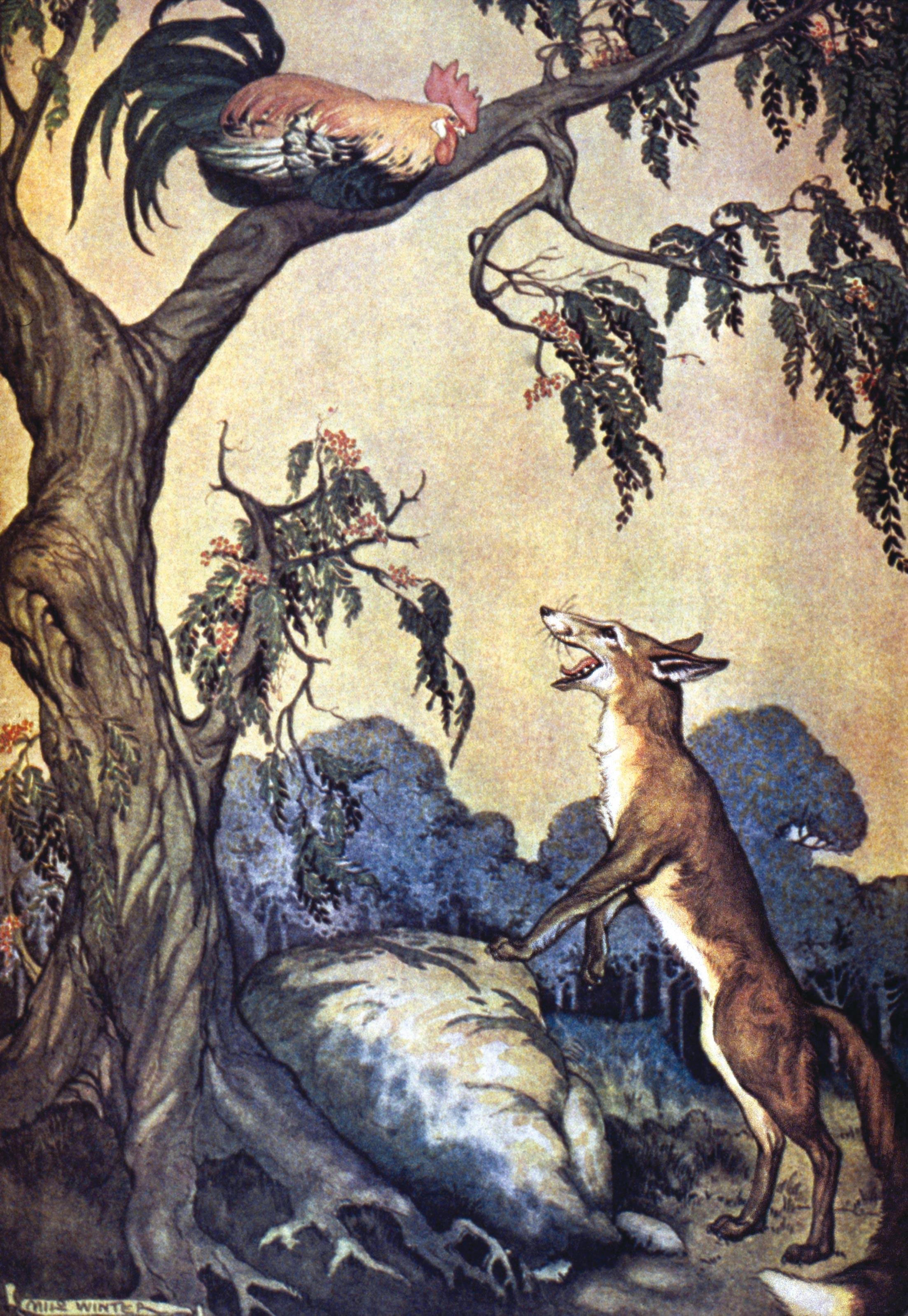 Le renard et le coq