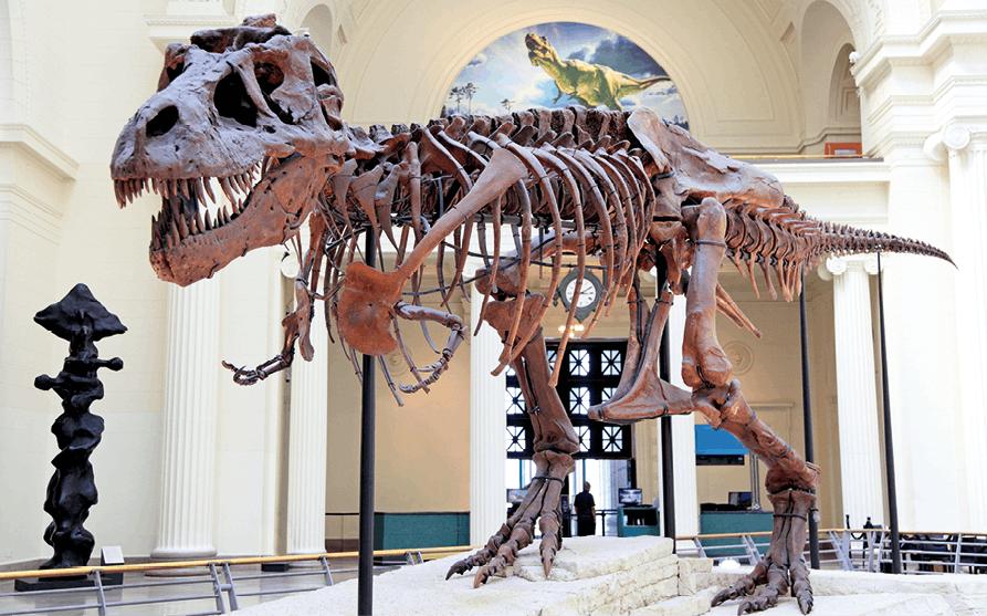 Logarithme népérien - Exercice 125 - Squelette tyrannosaure