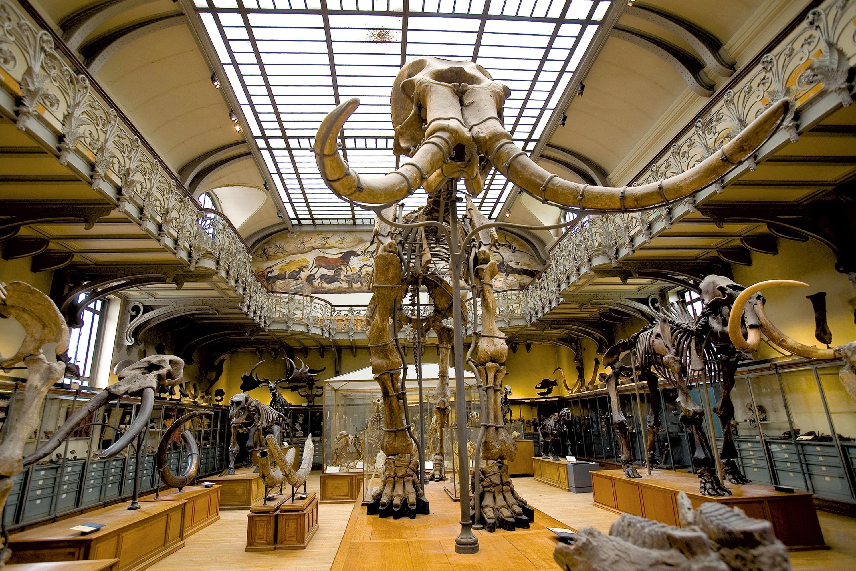 <stamp theme='svt-green1'>Doc. 1</stamp> Un squelette de mammouth au Muséum d'histoire naturelle à Paris.