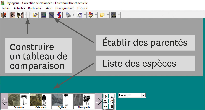 <stamp theme='svt-green1'>Doc. 2</stamp> Utiliser le logiciel Phylogène.