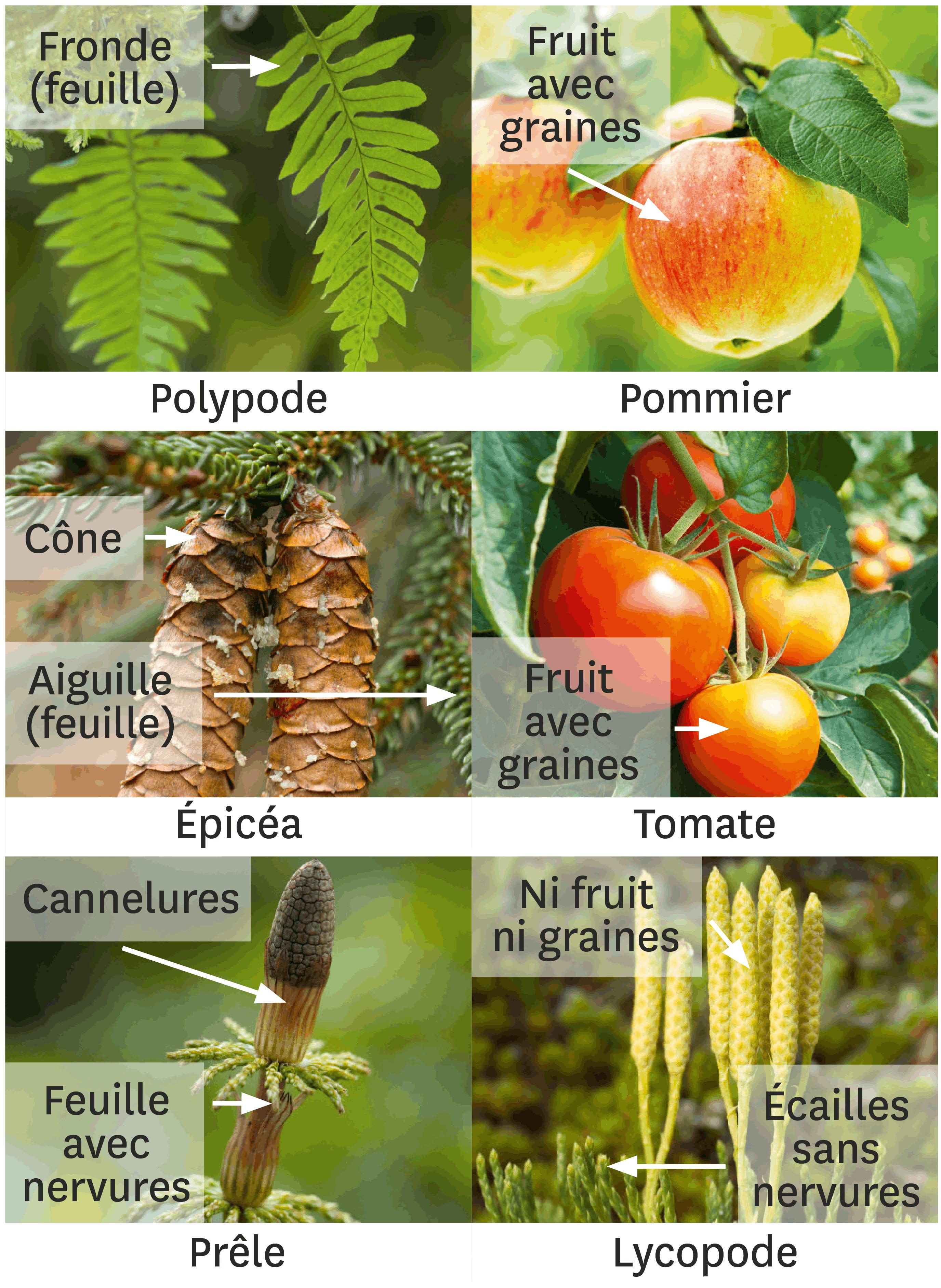 <stamp theme='svt-green1'>Doc. 4</stamp> Des fiches d'identité de quelques espèces actuelles.