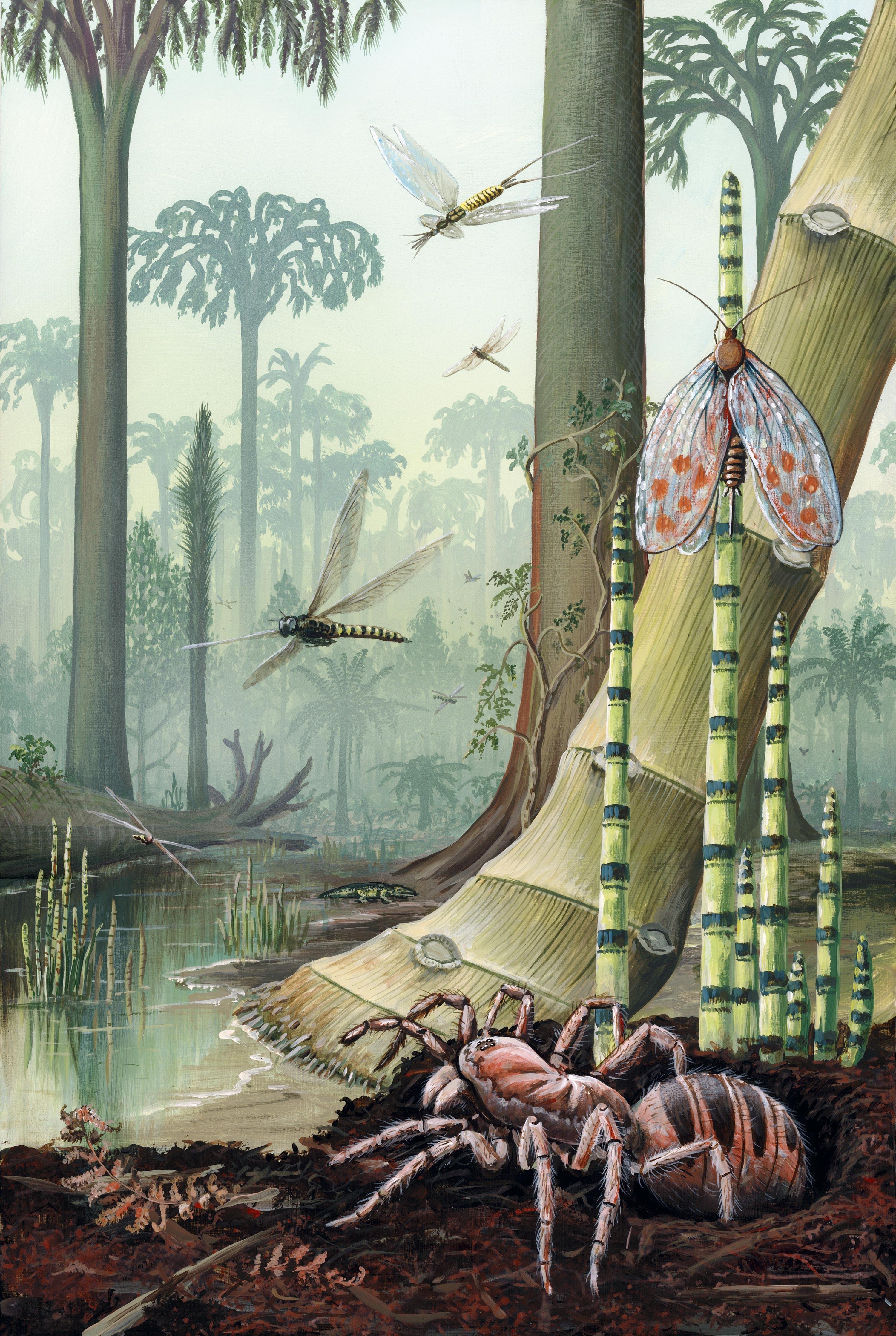 <stamp theme='svt-green1'>Doc. 2</stamp> Un paysage de forêt tropicale humide reconstitué d'après les fossiles retrouvés.