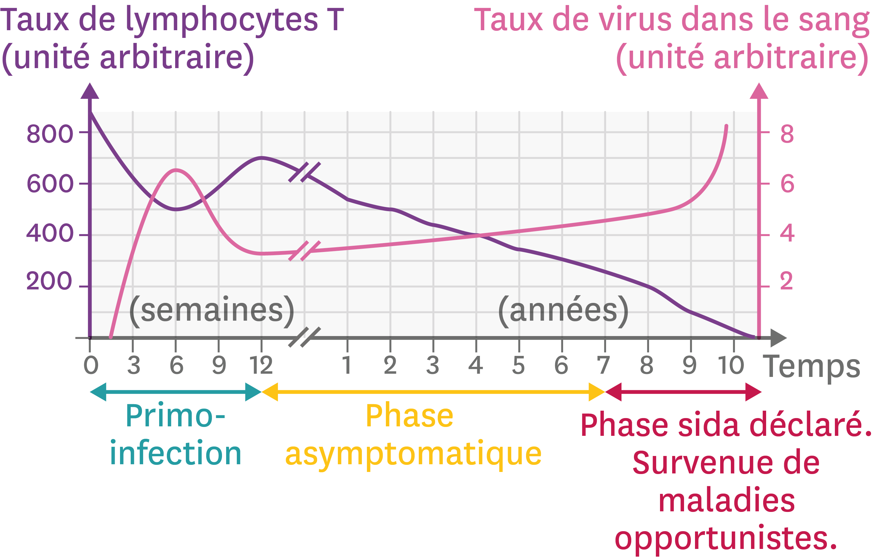 <stamp theme='svt-green1'>Doc. 2</stamp> L'évolution de l'infection par le VIH en fonction du temps.