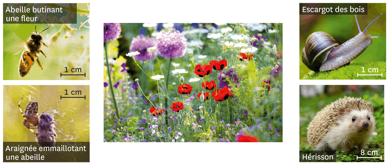 <stamp theme='svt-green1'>Doc. 1</stamp> Quelques espèces observées dans un jardin.