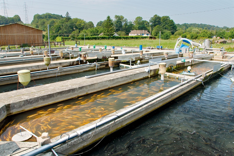 <stamp theme='svt-green1'>Doc. 2</stamp> Les bassins de pisciculture de la Calonne.
