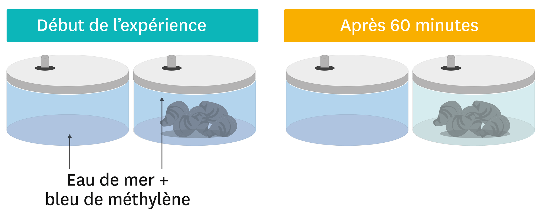 <stamp theme='svt-green1'>Doc. 6</stamp> La recherche du dioxygène dans l'eau en présence ou non de moules.