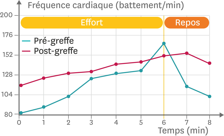 <stamp theme='svt-green1'>Doc. 4</stamp> La fréquence cardiaque d'un individu avant et après une greffe du cœur lors d'un effort graduel croissant de 6 minutes.