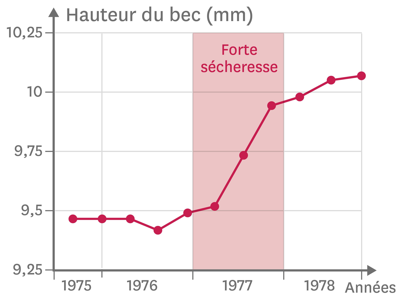 <stamp theme='svt-green1'>Doc. 5</stamp> La taille du bec chez les pinsons entre 1975 et 1979.