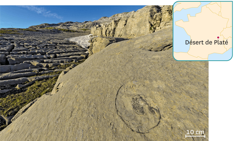 <stamp theme='svt-green1'>Doc. 1</stamp> Un fossile de nautile dans le désert du Platé, site naturel de Haute-Savoie.