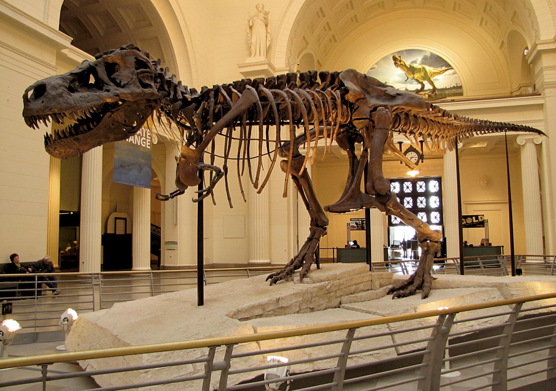 <stamp theme='svt-green1'>Doc. 1</stamp> Un fossile reconstitué de T-rex.