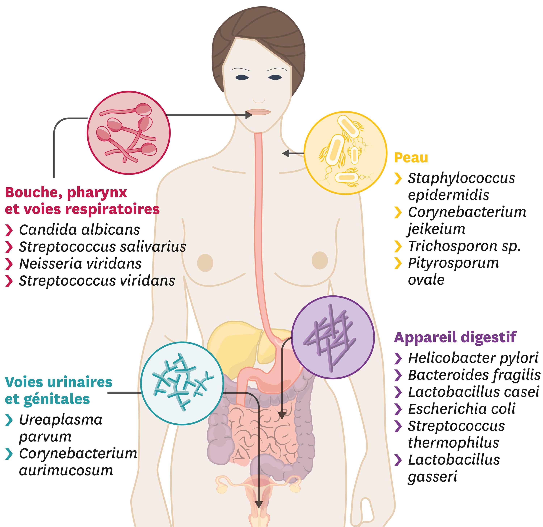 <stamp theme='svt-green1'>Doc. 4</stamp> Quelques microorganismes à la surface de notre corps.