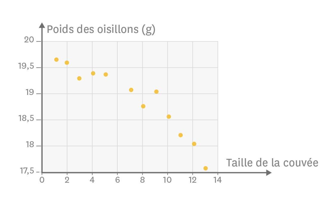 <stamp theme='svt-green1'>Doc. 2</stamp> Relation entre la taille de la couvée et le poids des oisillons chez la mésange (Parus major).