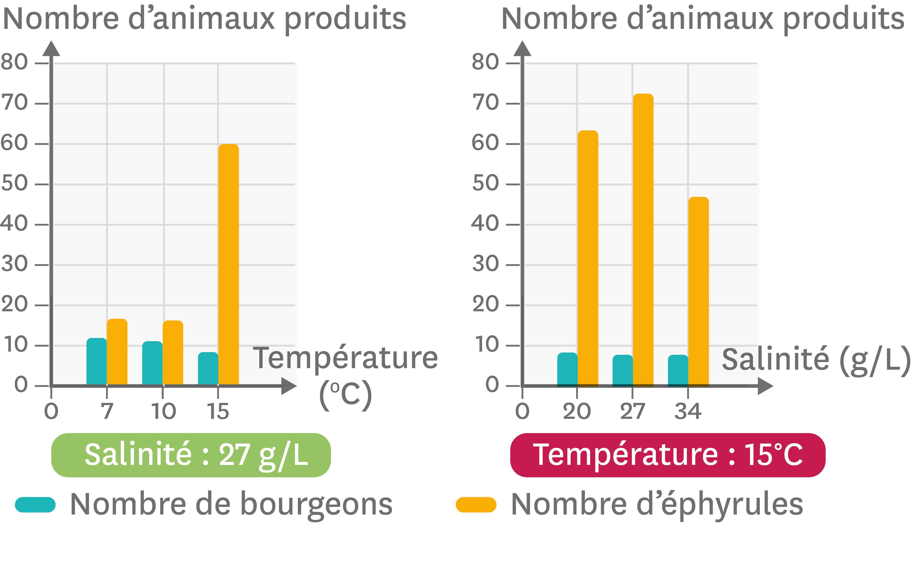 <stamp theme='svt-green1'>Doc. 2</stamp> Les variations du nombre de bourgeons et d'éphyrules en fonction de la température et de la salinité du milieu.