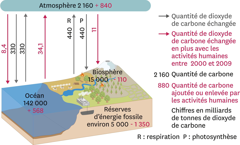<stamp theme='svt-green1'>Doc. 5</stamp> Cycle simplifié du dioxyde de carbone depuis 2000.