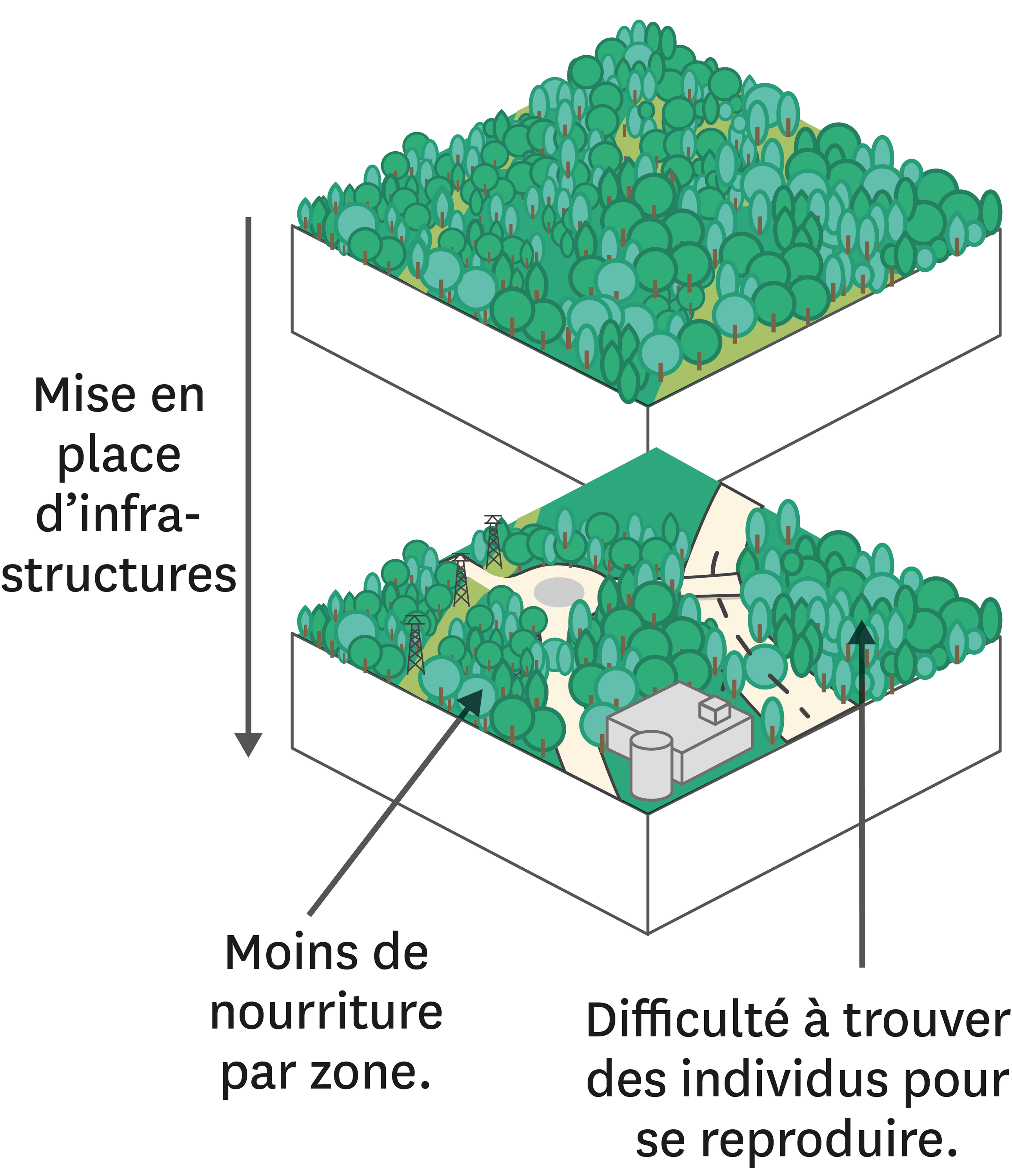 <stamp theme='svt-green1'>Doc. 2</stamp> La fragmentation d'un écosystème forestier suite aux aménagements par l'Homme.