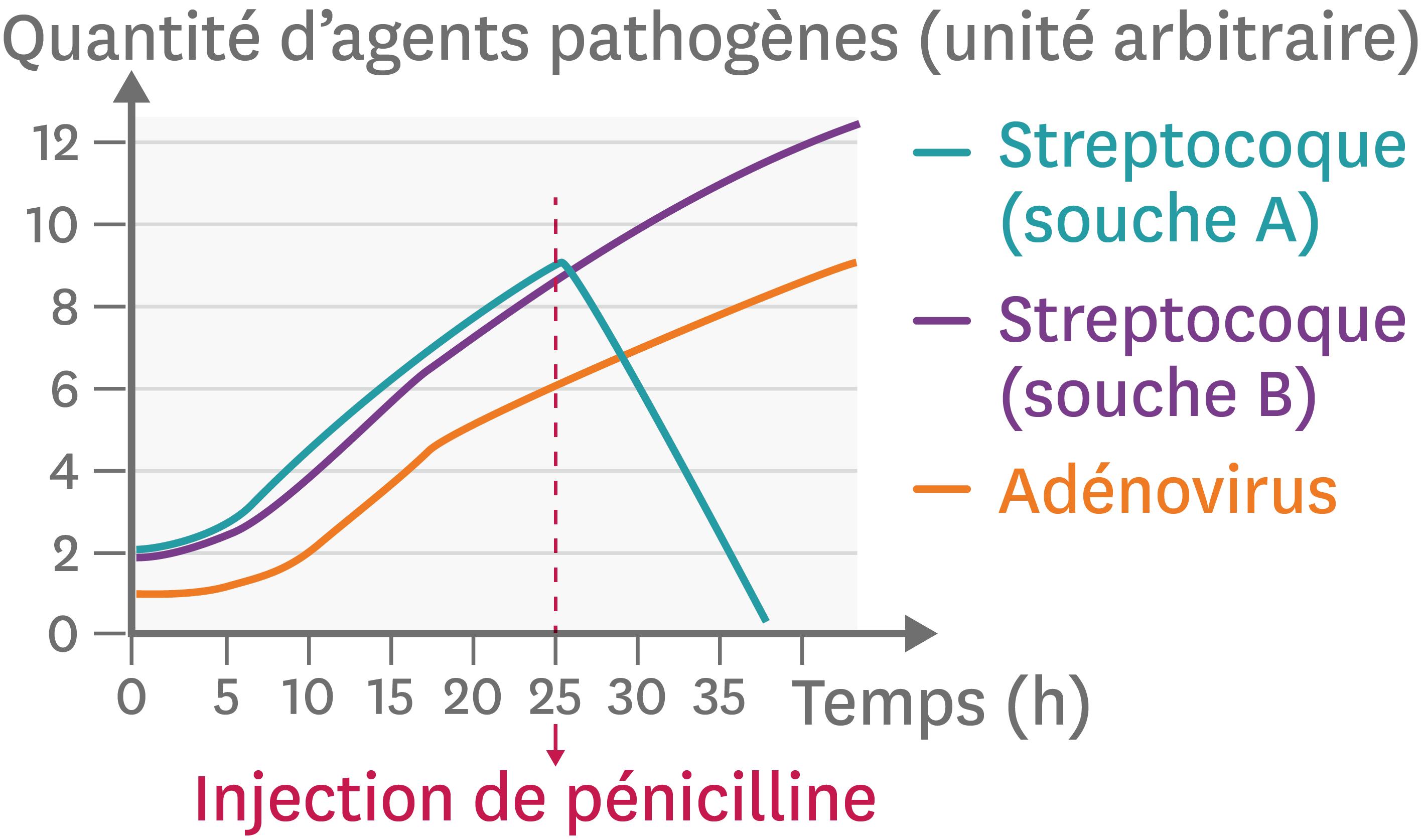 <stamp theme='svt-green1'>Doc. 4</stamp> L'effet d'un antibiotique (la pénicilline) contre deux souches différentes d'une bactérie ou un virus.