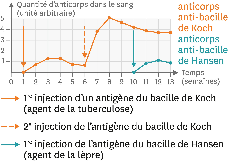 <stamp theme='svt-green1'>Doc. 4</stamp> Les variations de la quantité d'anticorps dans le sang après différentes injections.