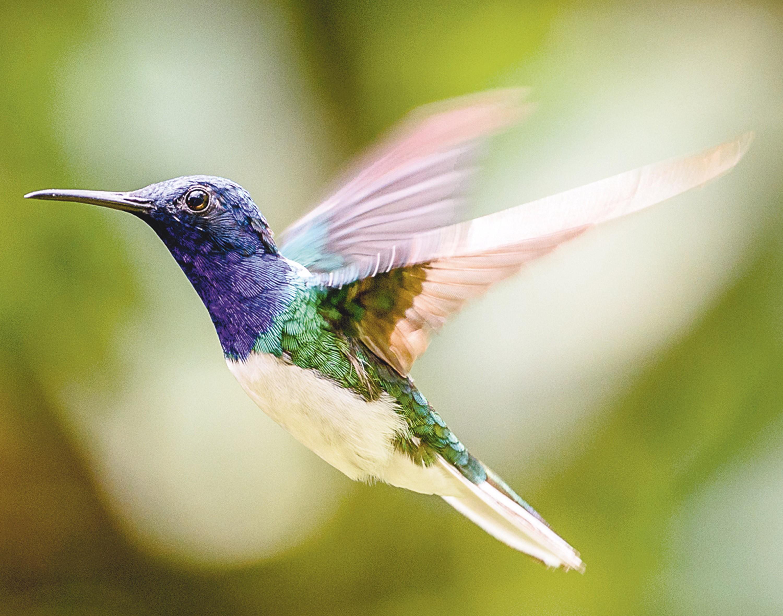 <stamp theme='pc-green1'>Doc. 1</stamp> Le vol du colibri.