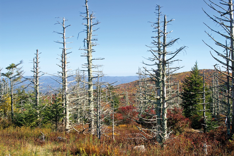 <stamp theme='pc-green1'>Doc. 1</stamp> Dépérissement forestier dû aux pluies acides.