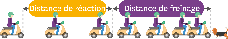<stamp theme='pc-green1'>Doc. 1</stamp> Distance de réaction et distance de freinage.