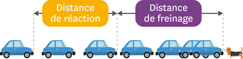 <stamp theme='pc-green1'>Doc. 5</stamp> Distance de réaction et distance de freinage.