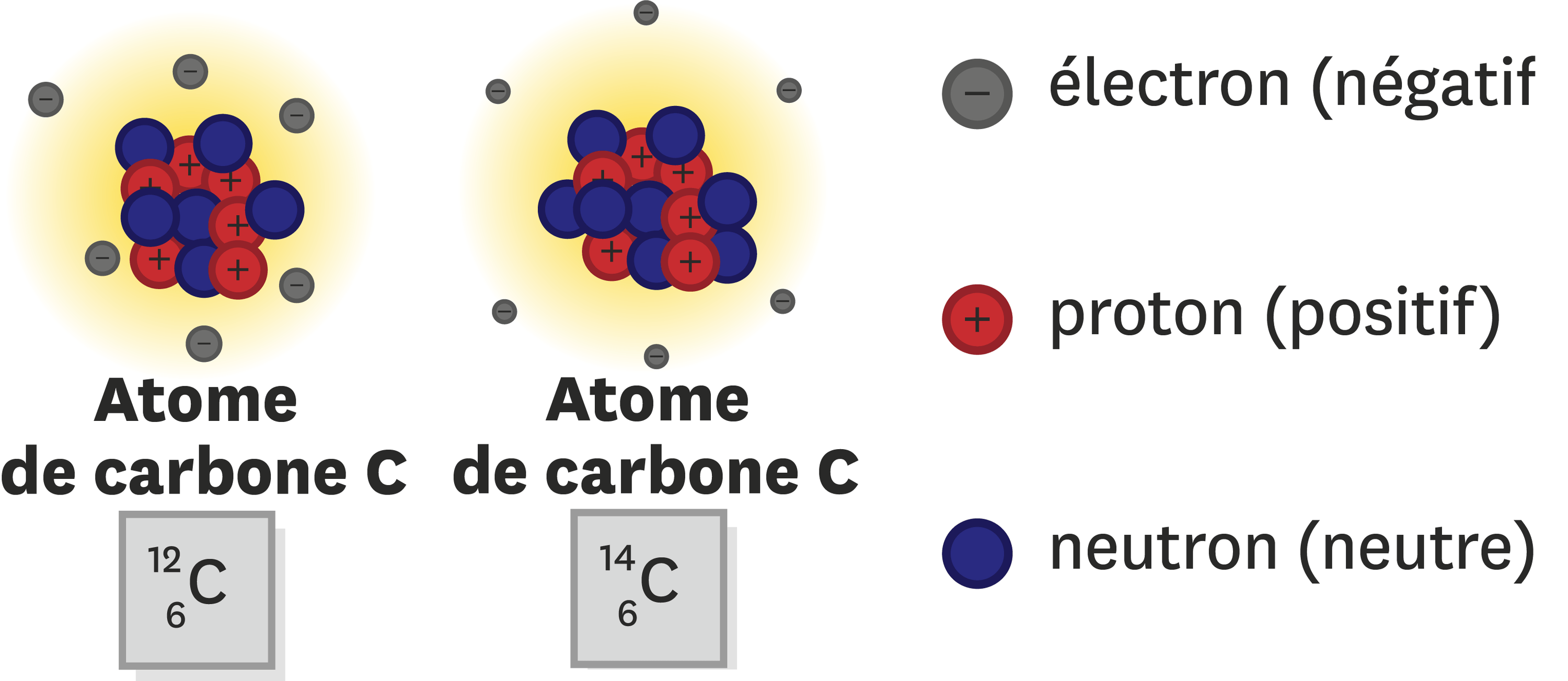 <stamp theme='pc-green1'>Doc. 3</stamp> Description de la composition des atomes de carbone 12 (de symbole 12C) et carbone  (de symbole 14C).