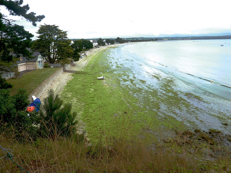 <stamp theme='pc-green1'>Doc. 3</stamp> La plage du Cap Coz (Bretagne) envahie par les algues vertes en juillet 2013.