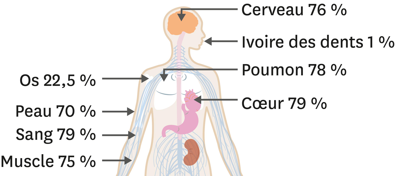 <stamp theme='pc-green1'>Doc. 1</stamp> Pourcentage d'eau dans quelques organes et tissus.