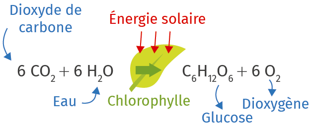 Équation de la photosynthèse