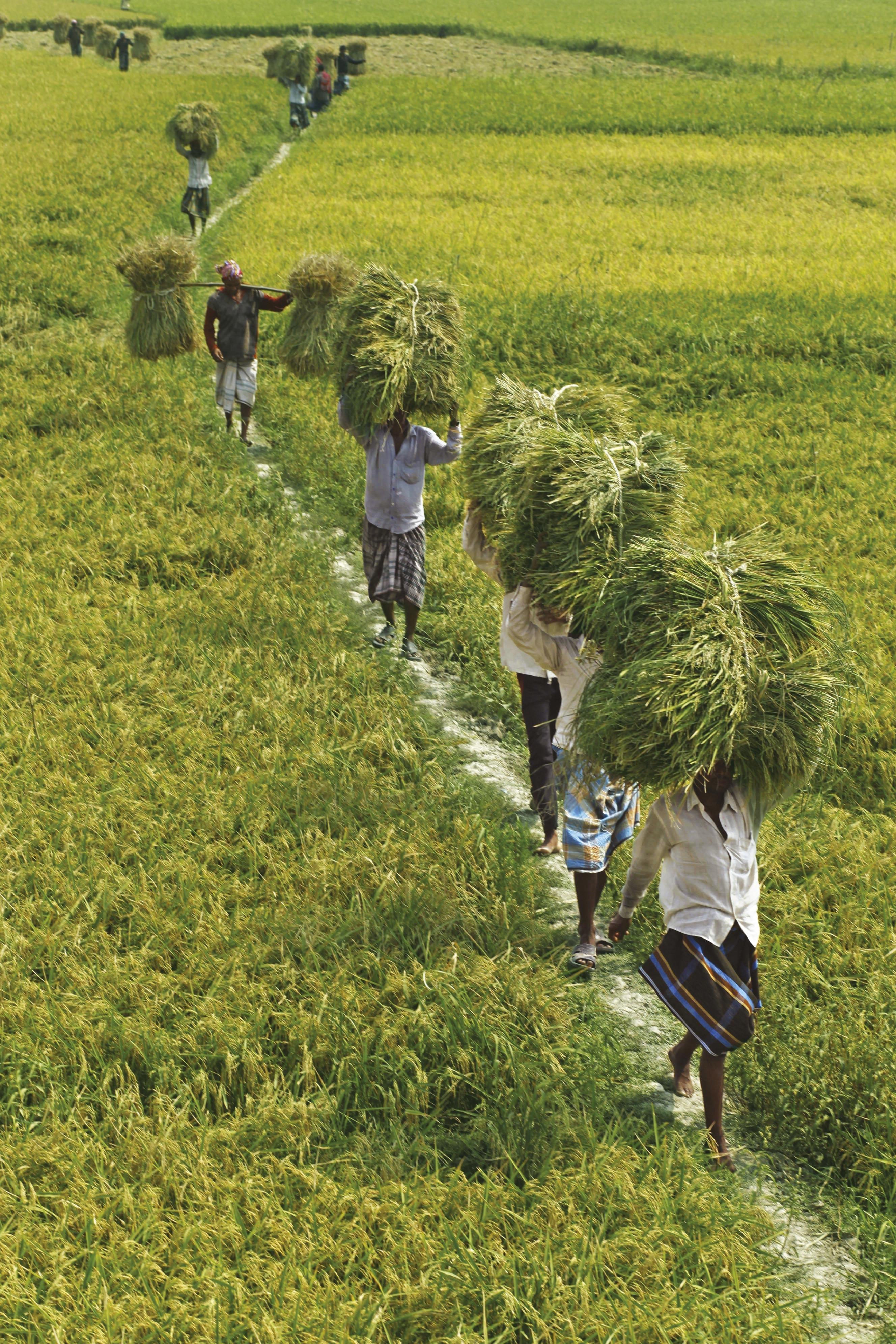 <stamp theme='his-green2'>Doc. 8</stamp> Les habitants du Bangladesh, entre campagnes et villes