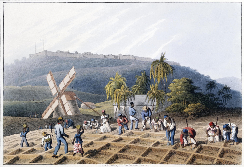 <stamp theme='his-green2'>Doc. 2</stamp> Une plantation modèle aux Antilles