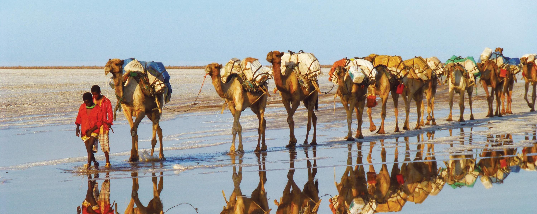 Une caravane de chameaux