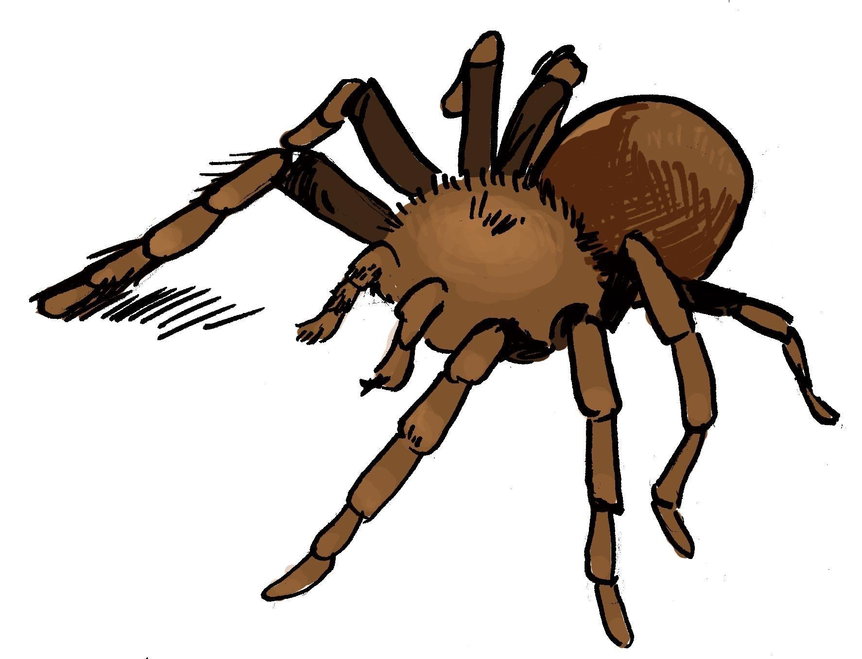 <stamp theme='maths-blue1'>Doc. 12</stamp> « En Espagne, une personne sur dix est arachnophobe. »
