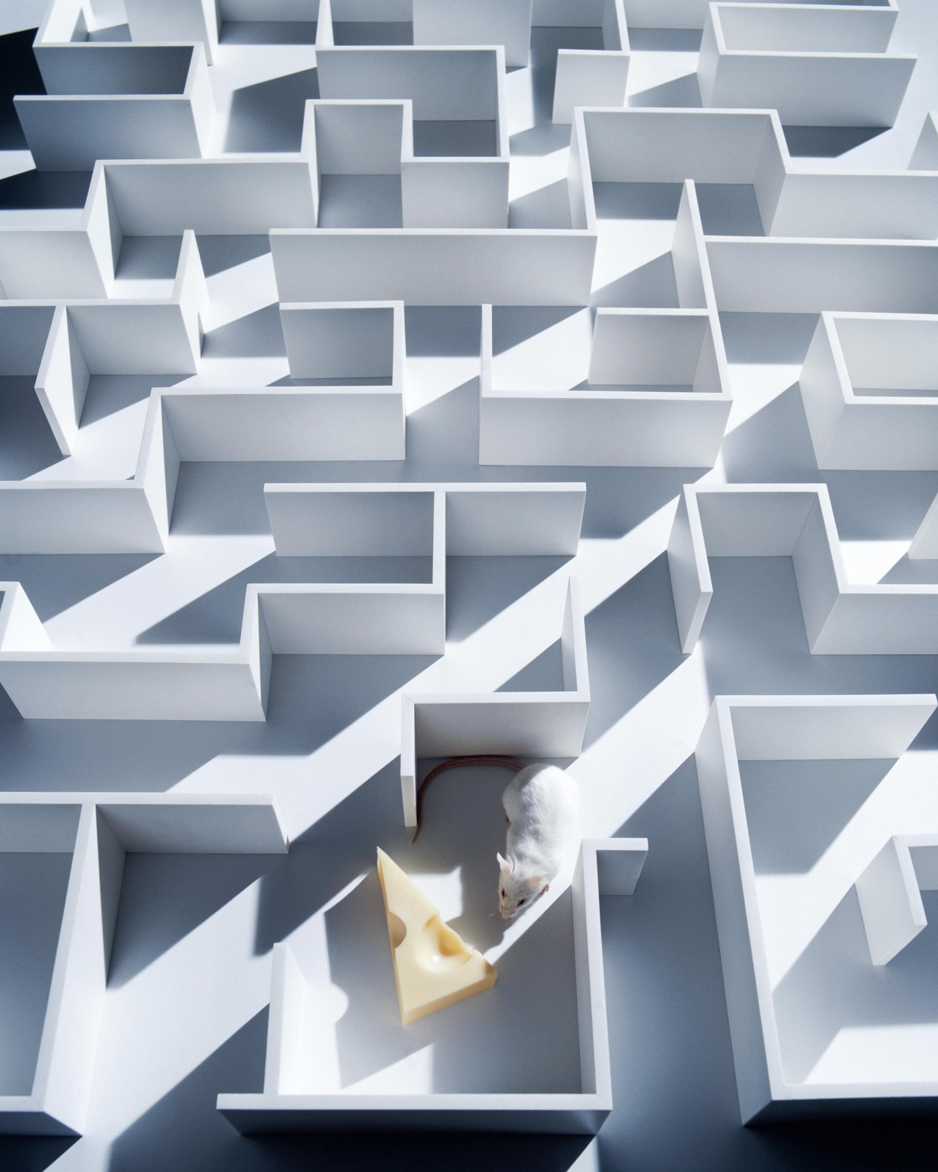Souris dans un labyrinthe