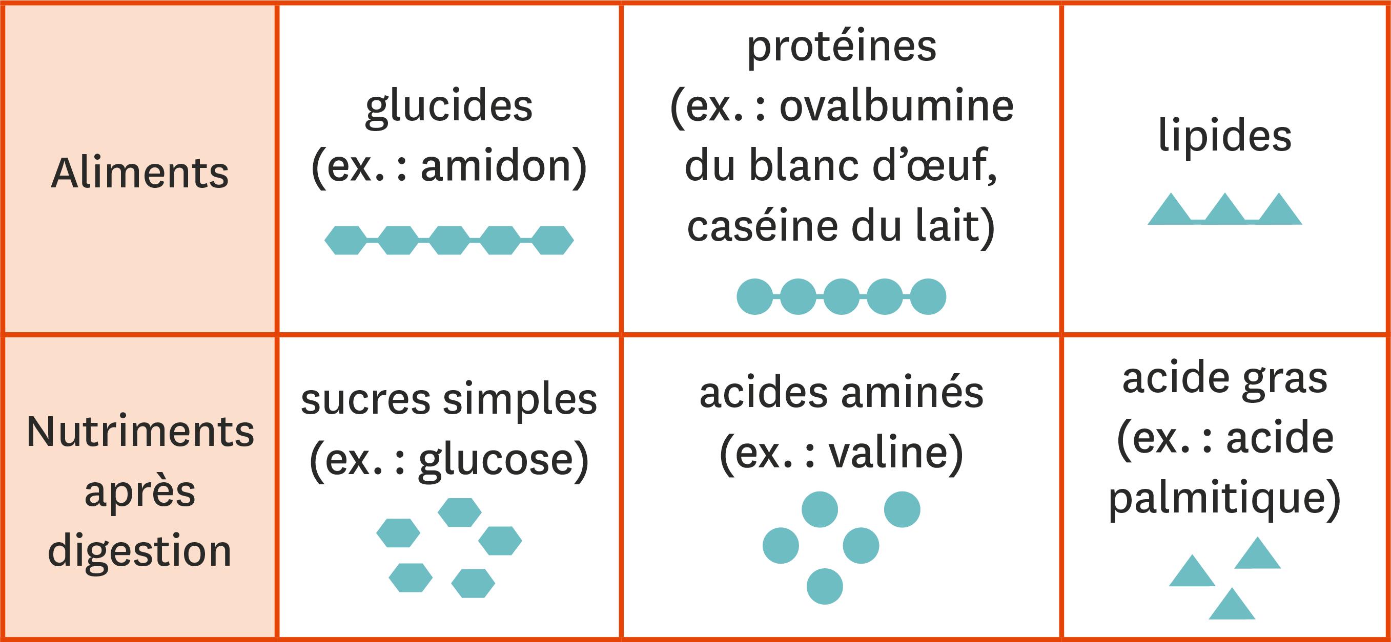 <stamp theme='svt-green1'>Doc. 3</stamp> Une comparaison des aliments et des nutriments.