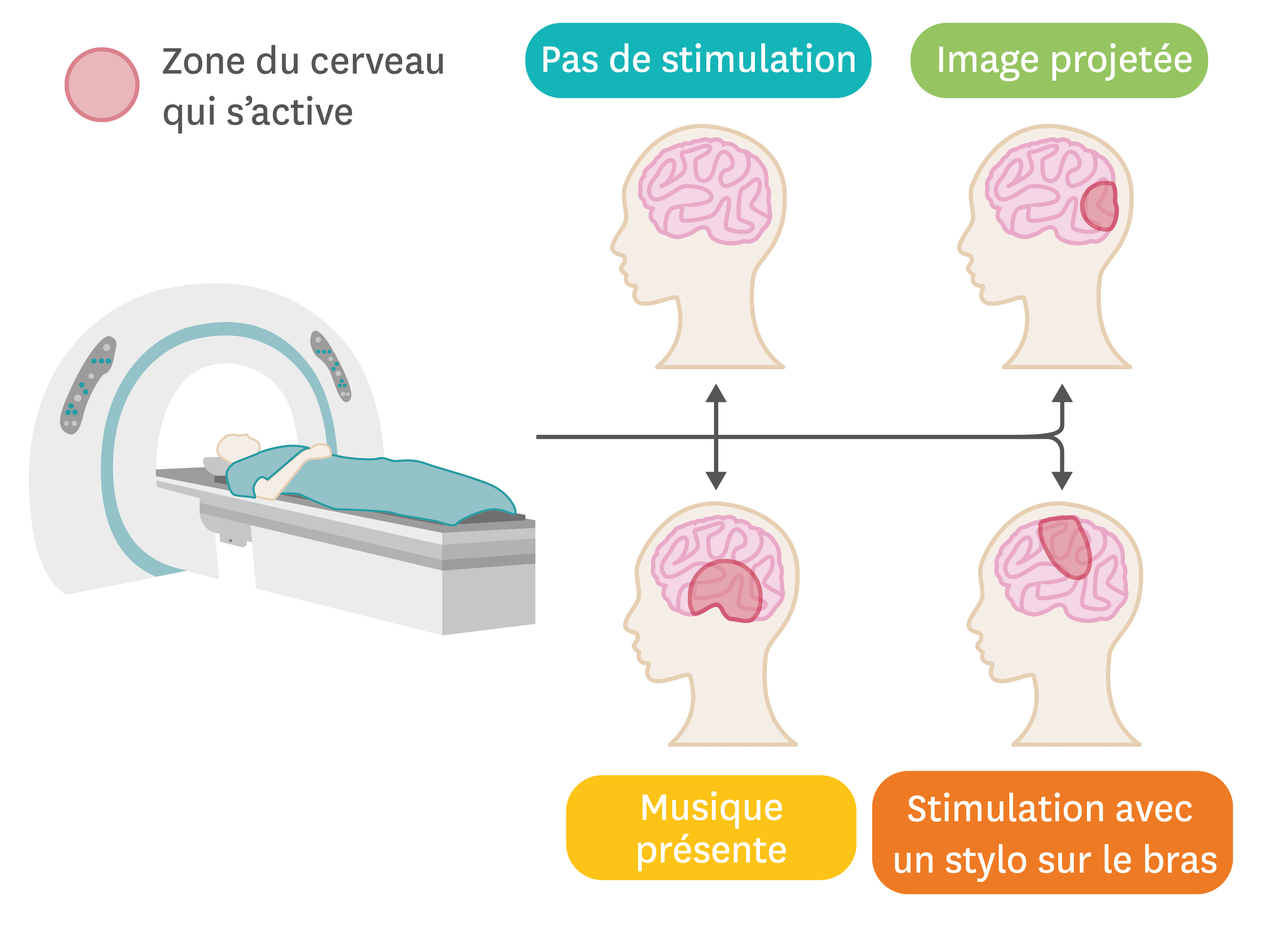 <stamp theme='svt-green1'>Doc. 1</stamp> L'IRM permet de visualiser les zones d'activation du cerveau.