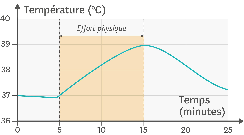 <stamp theme='svt-green1'>Doc. 2</stamp> Les variations de la température corporelle en fonction du temps et de l'activité.